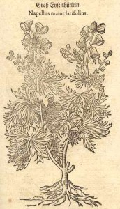 aconitum napellus tabernae
